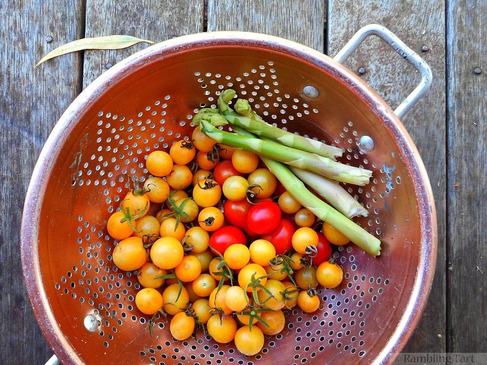 yellow tomato harvest