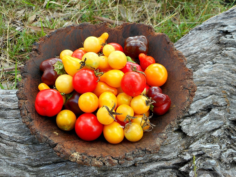 wooden bowl of tomatoes