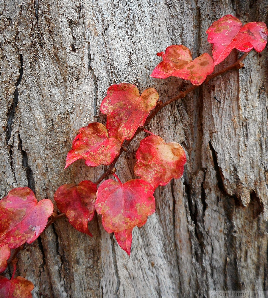 red leaves on old wood