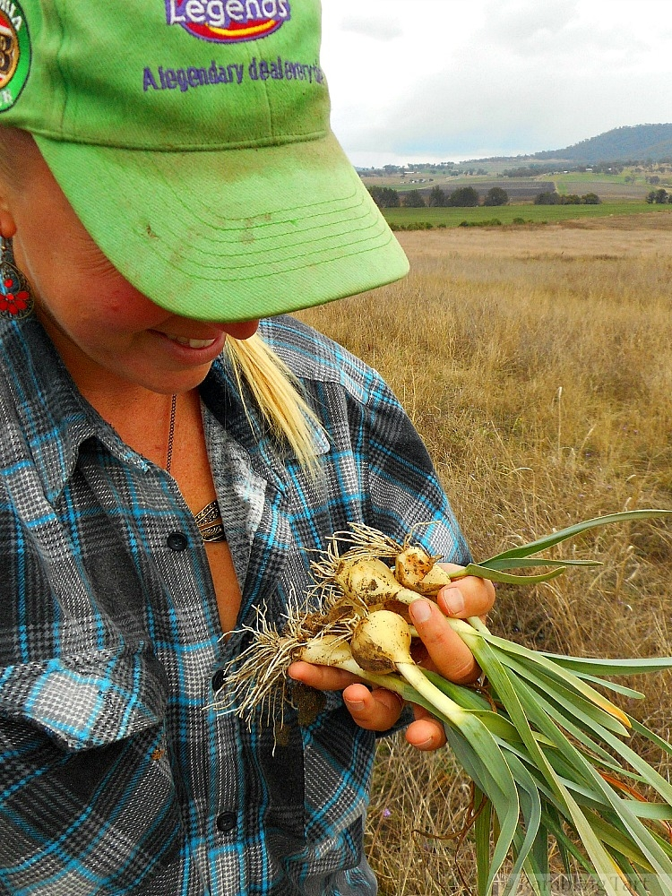 picking garlic seedlings