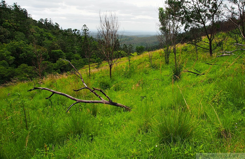 alpine meadow Queensland