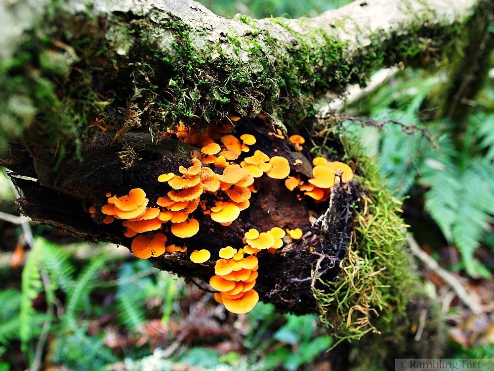 orange fungi in rainforest