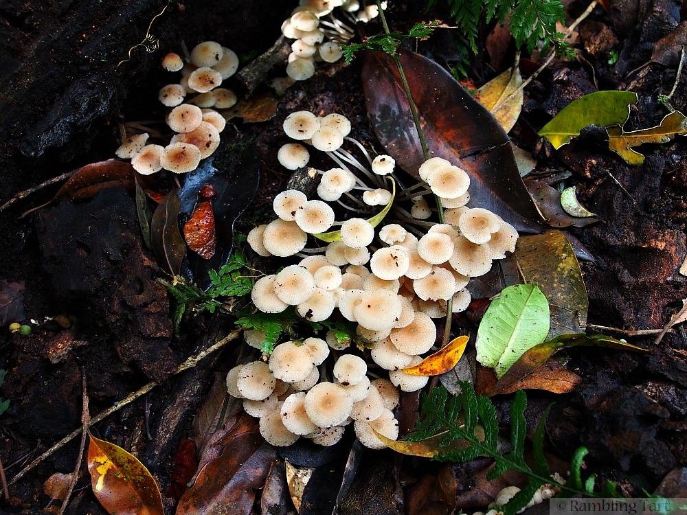 small white mushrooms in rainforest