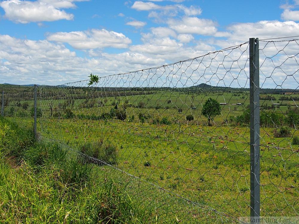 Dingo fence