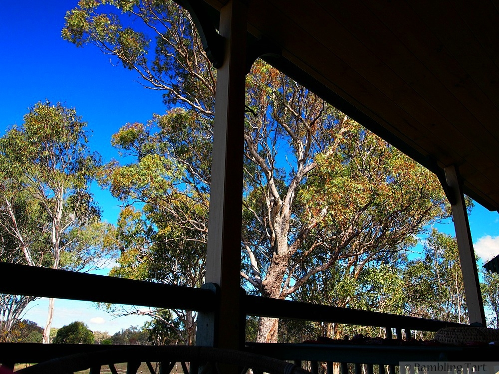 veranda and gum trees