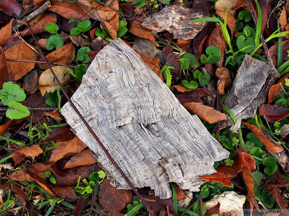 old wood in leaves