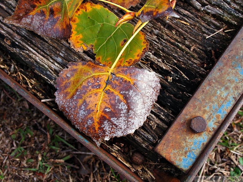 old leaf on old wood
