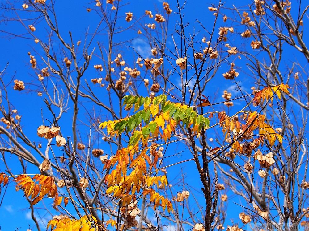 orange leaves blue sky