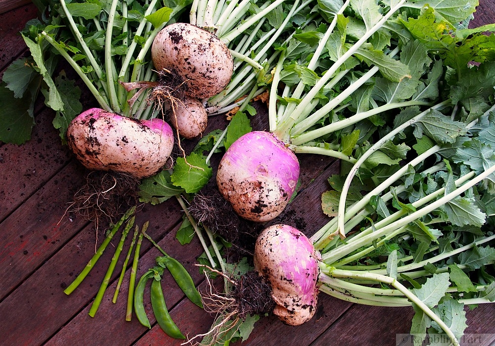 purple topped turnips