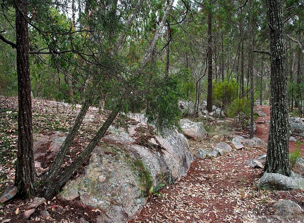 bush track happy valley