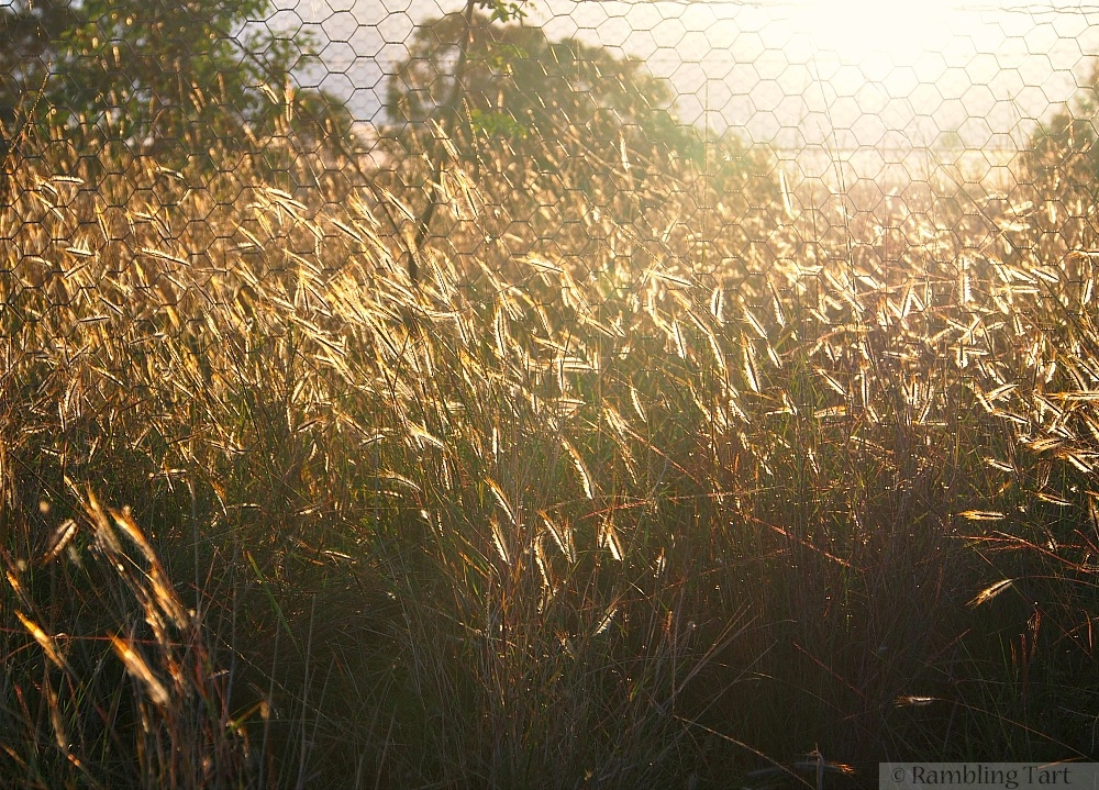 sunlight through grass