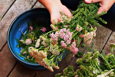 bouquet of pink yarrow