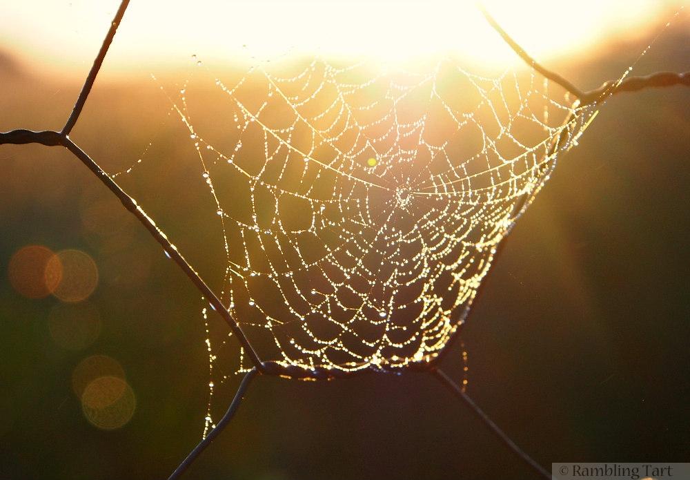 sunrise through spiders web