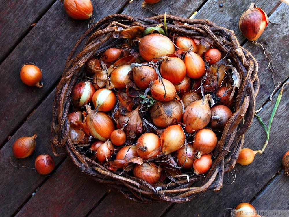 basket of onions
