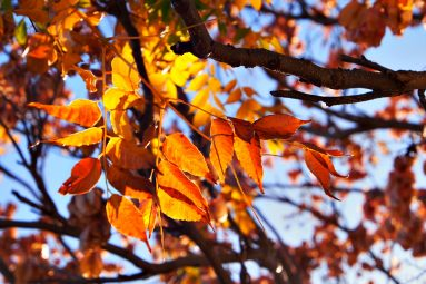 morning light through autumn leaves