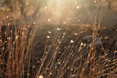 sunlight through wild grasses